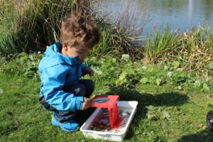 Examining water sample with a magnifyer