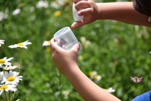 Moth release by Butterfly Conservation.