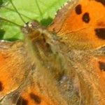 Burgess goes wild: Butterflies & Moths