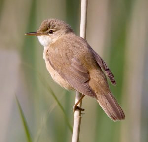 photo of bird on a reed