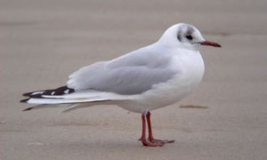 Photo of Gull on sand