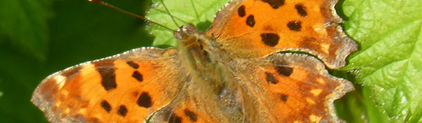 Photo of orange butterfly with spots