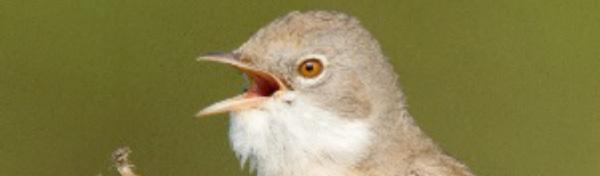 Photo of bird with open beak
