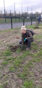 Sarah Vaughan planting