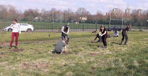 Volunteers plant small trees Neate St