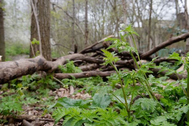 Image of fallen wood and spring growth.